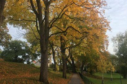 Höstpromenader i Linköping